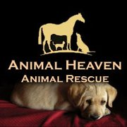 Urgent Appeal To Help The Animals Of Ahar Sanctuary